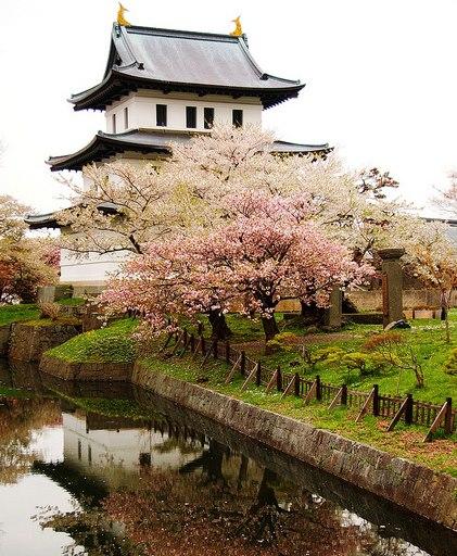 Hoa Anh Đào nở ở Công viên Matsumae-koen