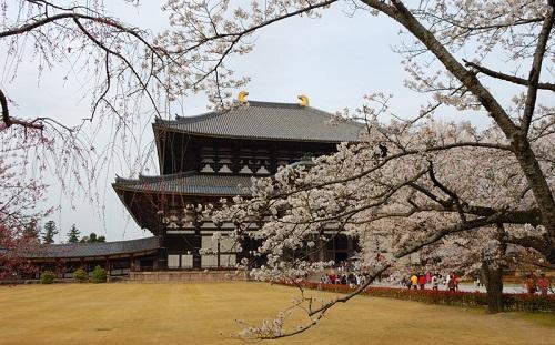 Hoa Anh Đào nở ở chùa Todaiji