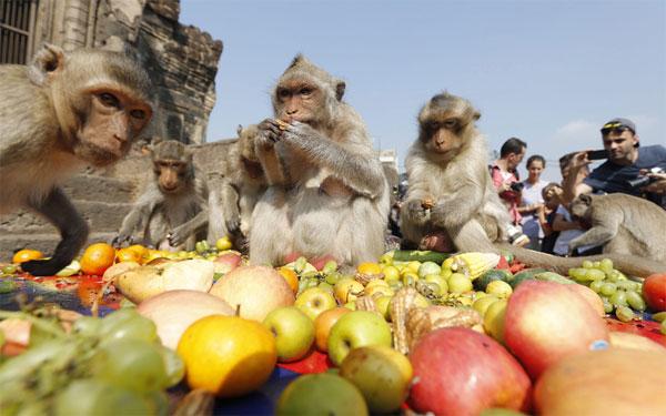 Lễ hội khỉ - Lễ hội lạ lùng trên thế giới