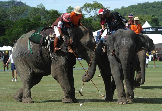 Polo cưỡi voi - Môn thể thao nổi tiếng Thái Lan