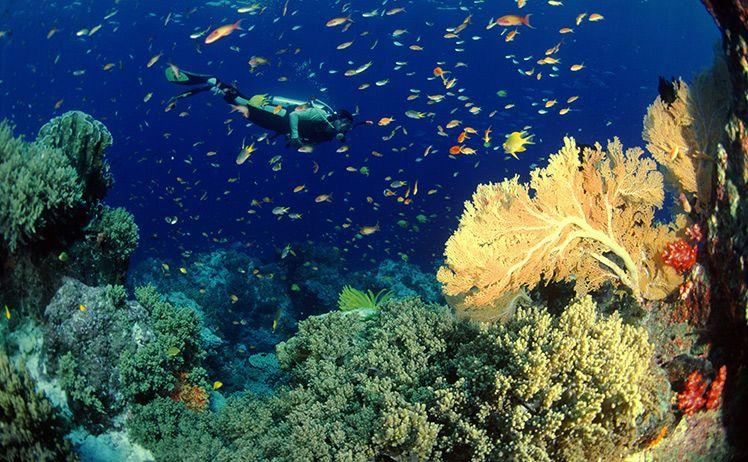 Khám phá đảo san hô  Pattaya Thái Lan
