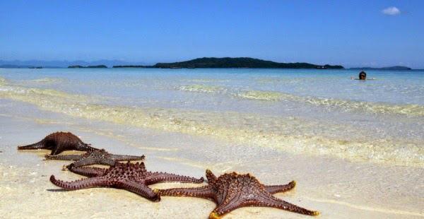 Những chú sao biển nằm phơi nắng trên bờ cát Cô Tô